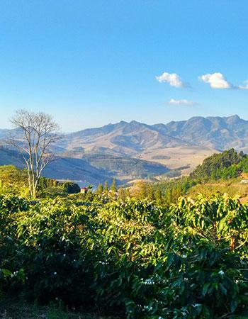 Fazenda Édio Miranda Araponga